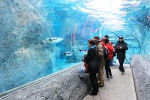 โลกใต้อุโมงค์ดูเพนกวินว่ายน้ำ