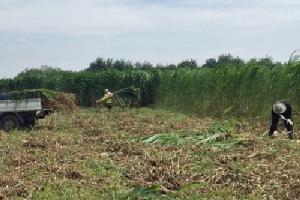 ซีพีเอฟสานต่อโครงการปันน้ำปุ๋ยสู่ชุมชนลดผลกระทบด้านการขาดแคลนน้ำ