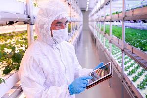 ชมความล้ำโรงงานผลิตพืช Plant Factory ปลูกได้ทั้งปีไม่พึ่งฤดูกาล
