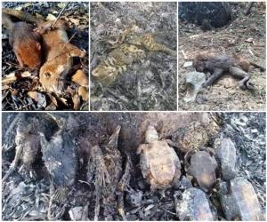 สัตว์ป่าที่ต้องเสียชีวิตไปเป็นจำนวนไม่น้อย