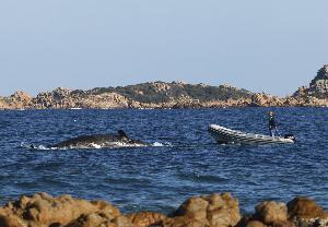 ซากวาฬตายจากการบริโภคพลาสติก ลอยอืดที่ชายฝั่งของเกาะ Sardinia island ของอิตาลี เมื่อปลายเดือน มี.ค.2019 (SEAME Sardinia Onlus via AP)