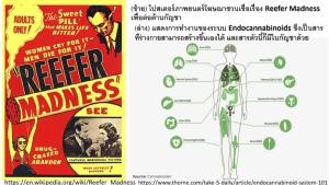 """ความจริงที่คนไทยควรรู้ """"สัตว์มีกระดูกสันหลังทุกชนิดต้องการใช้สารที่มีอยู่ในกัญชา"""""""