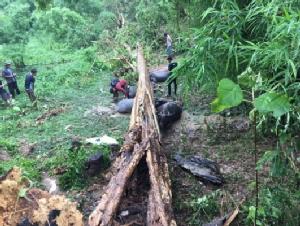 พายุซัดเมืองเลยหลายอำเภอ ต้นไม้ล้มทับอีแต๊กนำเที่ยว-ทับควายตาย 1 หลังหัก 3
