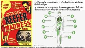 """ความจริงที่คนไทยควรรู้ """"สัตว์มีกระดูกสันหลังทุกชนิดต้องการใช้สารที่มีอยู่ในกัญชา"""" / ประสาท มีแต้ม"""