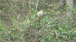 แล้งจัด! ฝูงลิงแสมนับพันลงจากเขาปฐวี ยึดลานวัดรอผู้ใจบุญนำผักผลไม้มาเลี้ยง