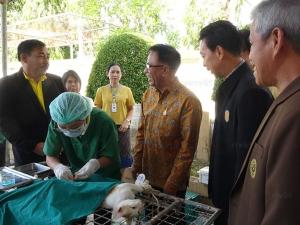 สตูลเร่งฉีดวัคซีนป้องกันโรคพิษสุนัขบ้า เล็งครอบคลุม 10,000 ตัว ภายใน 4 เดือน
