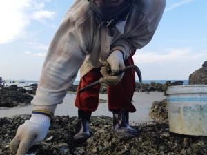 นักท่องเที่ยวตะลึง!! โขดหินหลายร้อยก้อนโผล่ ทั้งหอยแมลงภู่ หอยนางรม