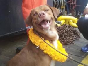 หมาบุญรอดจอมอึด! กลับถึงฝั่งแล้ว หลังลอยคอกลางอ่าวไทยห่างฝั่งกว่า 220 กม.