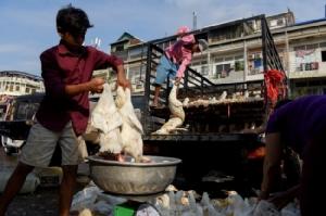 พบเชื้อไวรัสไข้หวัดนกสายพันธุ์ H5N6 ระบาดในกัมพูชา
