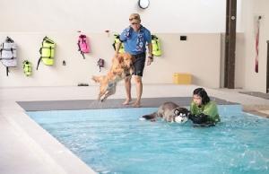 สระว่ายน้ำน้องหมา