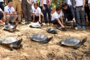 เขมรปล่อย 'เต่าพระราชา' ลงแม่น้ำ 20 ตัว หวังช่วยเพิ่มประชากรในธรรมชาติ