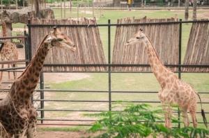 สวนสัตว์เปิดเขาเขียว ชวนเที่ยววันแรงงานแห่งชาติ 1 พ.ค.นี้