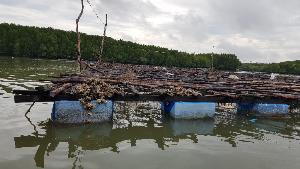 กระชังเลี้ยงหอยนางรม ของชุมชนเกาะเคี่ยมใต้
