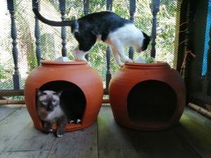 """ขายดิบขายดี! สาวปากน้ำโพไอเดียเริด ทำ """"โอ่งเจ้านาย"""" ช่วยคลายร้อนหมา-แมว ออเดอร์ทะลัก"""