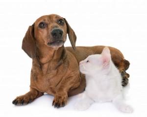 """""""ฮีตสโตรก"""" โรคที่สัตว์เลี้ยงก็เป็นได้ รพส.ทองหล่อ แนะวิธีรับมือหากเกิดขึ้นกับสุนัขและแมวในช่วงหน้าร้อน"""