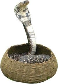 การย้าย การดูด และงูเห่า