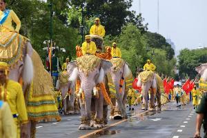 ช้างคชลีลา 11 เชือก เดินเทิดไท้องค์ราชัน ถวายพระพรชัยมงคล ในหลวงรัชกาลที่ ๑๐