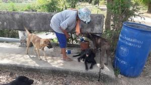 ไอ้หื่นก่อเหตุซ้ำเข้าปล้นทรัพย์ยายวัย 68 ปี โชคดีสุนัขที่เลี้ยงไว้ช่วยชีวิต