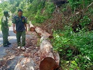 พบลักลอบตัดไม้ในพื้นที่สวนป่าพระนามาภิไธยภาคใต้ จ.ยะลา ยึดไม้ซุง-ผืนป่าคืน