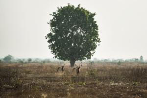 เขตอนุรักษ์ธรรมชาติแล้งจัด ชาวพม่าระดมทุนเติมน้ำลงสระช่วยชีวิตฝูงละมั่งใกล้สูญพันธุ์