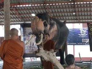 """พาไปดู """"พลายเอกชัย"""" ช้างเผือกถวาย ร.๑๐ เผยชาวบ้านที่กระบี่ประกาศขาย 3 ปีไม่มีใครซื้อ"""