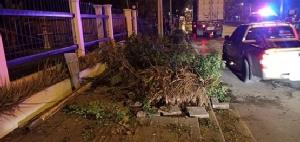 สลด! ซิ่งเก๋งแหกโค้งชนต้นไม้ขาดสองท่อน ไฟลุกท่วมคลอกเสียชีวิต 3 ราย