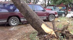 ระทึก! ต้นหางนกยูงยักษ์โค่นทับรถพังยับ คุณตาชาวลำปางจอดรถรอเมียขายของหวิดดับ