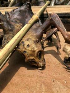 สะเทือนใจกันทั่ว! บุกทลายรังพรานป่าชายแดนแม่สอด เจอทั้งซากเลียงผายันลิงลม-นกหายากถูกขังรอเชือดอีก