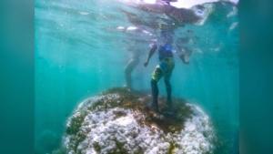 """""""ดร.ธรณ์"""" วอนนักท่องเที่ยว อย่าทำร้าย-เหยียบย่ำปะการังฟอกขาวซ้ำ เสี่ยงปะการังตาย"""