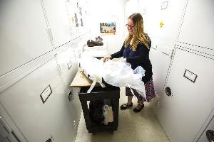 ทิฟฟานี เอเดรน ผู้จัดการฝ่ายเก็บสะสมตัวอย่างพิเศษของมหาวิทยาลัยไอโอวา นำชิ้นส่วนขากรรไกรลูกช้างมาสโทดอน จัดแสดงภายในคลังเก็บตัวอย่างของมหาวิทยาลัยไอโอวา (Joseph Cress/Iowa City Press-Citizen via AP)