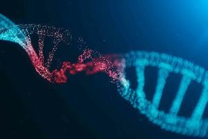 เหตุใดจึงต้องตรวจหาสารบ่งชี้การถูกทำลายของดีเอ็นเอ
