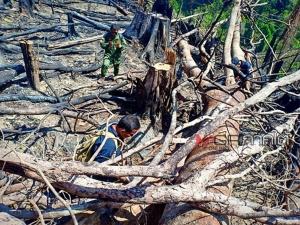 ยิ่งตรวจยิ่งเจอ! แก๊งมอดไม้ทั้งตัดทั้งเผารุกป่าพระนามาภิไธยภาคใต้
