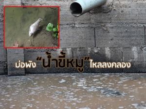 """บ่อพักพัง """"น้ำขี้หมู"""" ไหลลงคลองกลางหมู่บ้านที่พัทลุง ปลาตายเกลื่อน-กระทบชุมชน"""