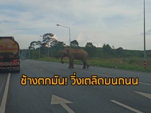 """ช่วยด่วน! พบ """"ช้างตกมัน"""" วิ่งเตลิดบนถนนเซาร์เทิร์นซีบอร์ดในสุราษฎร์ฯ หวั่นอันตราย (มีคลิป)"""