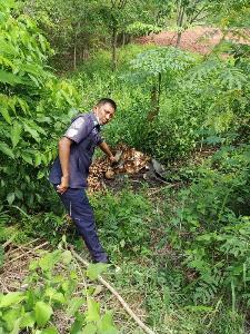 ผงะ! พบศพชายเหลือแต่โครงกระดูก ห่อด้วยเสื่อน้ำมันถูกทิ้งริมถนนสายนครไทย-ภูหินร่องกล้า