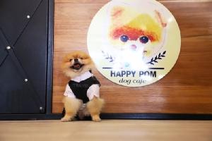 พนักงานต้อนรับที่ Happy Pom Dog Café