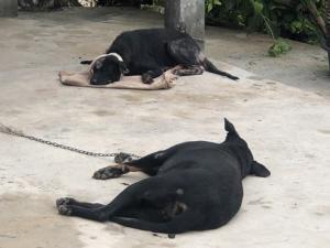 รู้ตัวแล้ว! ไอ้โหดสนั่นโซเชียลฯ ฟัน 2 สุนัขล่ามโซ่หัวแบะ-ปากขาดฟันหลุดปางตาย แต่ไม่แจ้งดำเนินคดี