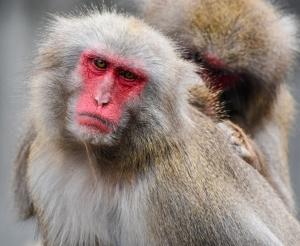 จาก Animal Farm ถึง เกาะลิง ... กว่าจะรู้ตัวว่าถูกขัง (1)
