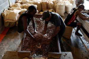 คนงานเตรียมบรรจุโกโก้ตากแห้งลงกระสอบ (REUTERS/Marco Bello/File Photo)
