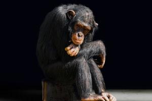 จาก Animal Farm ถึง เกาะลิง ... กว่าจะรู้ตัวว่าถูกขัง (จบ)