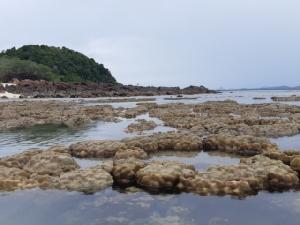 ตื่นตา!! น้ำทะเลลดต่ำ ส่งผลปะการังเกาะทะลุโผล่พ้นน้ำ