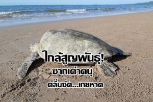 คาดถุงพลาสติก! คร่าชีวิตเต่าตนุที่ใกล้สูญพันธุ์อีกแล้ว คลื่นซัดเกยหาดชุมพร