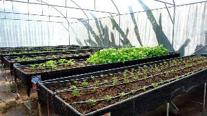 กรมส่งเสริมการเกษตรสืบสานโครงการตามพระราชดำริเกษตรเพื่ออาหารกลางวัน