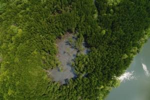 ภัยคุกคาม! กลุ่มหาเพรียงเลือดนำไปขาย ทำป่าโกงกางพังงาเสียหายนับ 100 ไร่