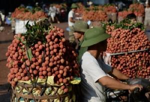 ชาวสวนเวียดนามเฮลิ้นจี่ราคาพุ่งได้อานิสงส์ผลผลิตเพื่อนบ้านไม่ค่อยดี