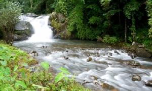 เปิดลานสนภูสอยดาว 1 ก.ค.นี้ สายป่า-ขาลุย ห้ามพลาดทุ่งดอกหงอนนาคสวยที่สุดในเมืองไทย