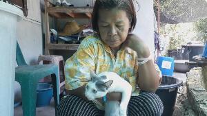 หยุดเถอะ! ป้าป่วยมะเร็งวอนคนใจร้ายวางยาเบื่อฆ่าแมวตาย 11 ตัว ส่วนสุนัขช่วยทันหวุดหวิด