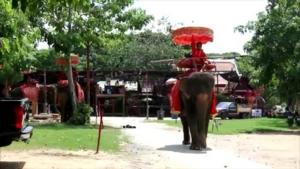 วังช้างอยุธยาแลเพนียด เตรียมอุทธรณ์คำสั่งกรมศิลป์ขับไล่พ้นอุทยานฯ
