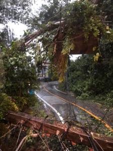 ฝนหนักเกาะช้าง จ.ตราด ทำพายุพัดต้นไม้ล้มทับเสาไฟฟ้าโค่น คลื่นทะเลสูง