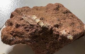 ขุดพบฟอสซิลไดโนเสาร์กินเนื้อตัวแค่ 1.5 เมตร